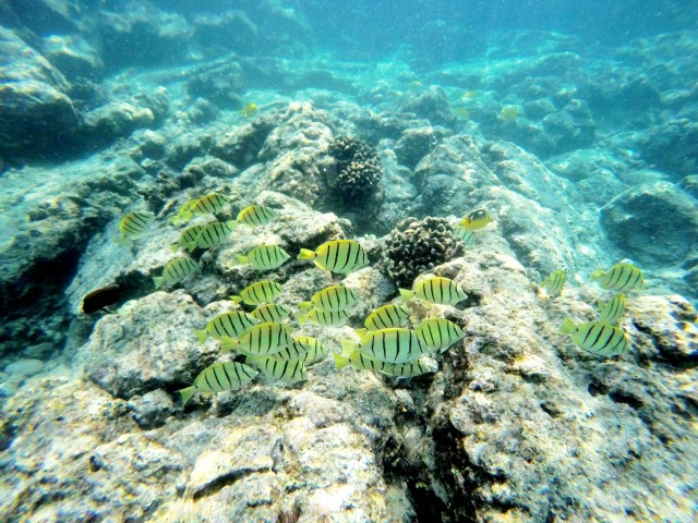 snorkling-kealakekua-bay-hawaii-happytimes